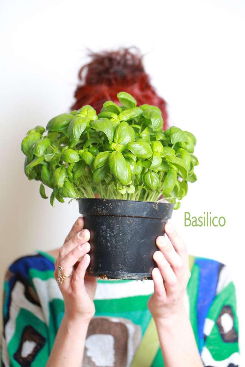 basilico-2.jpg