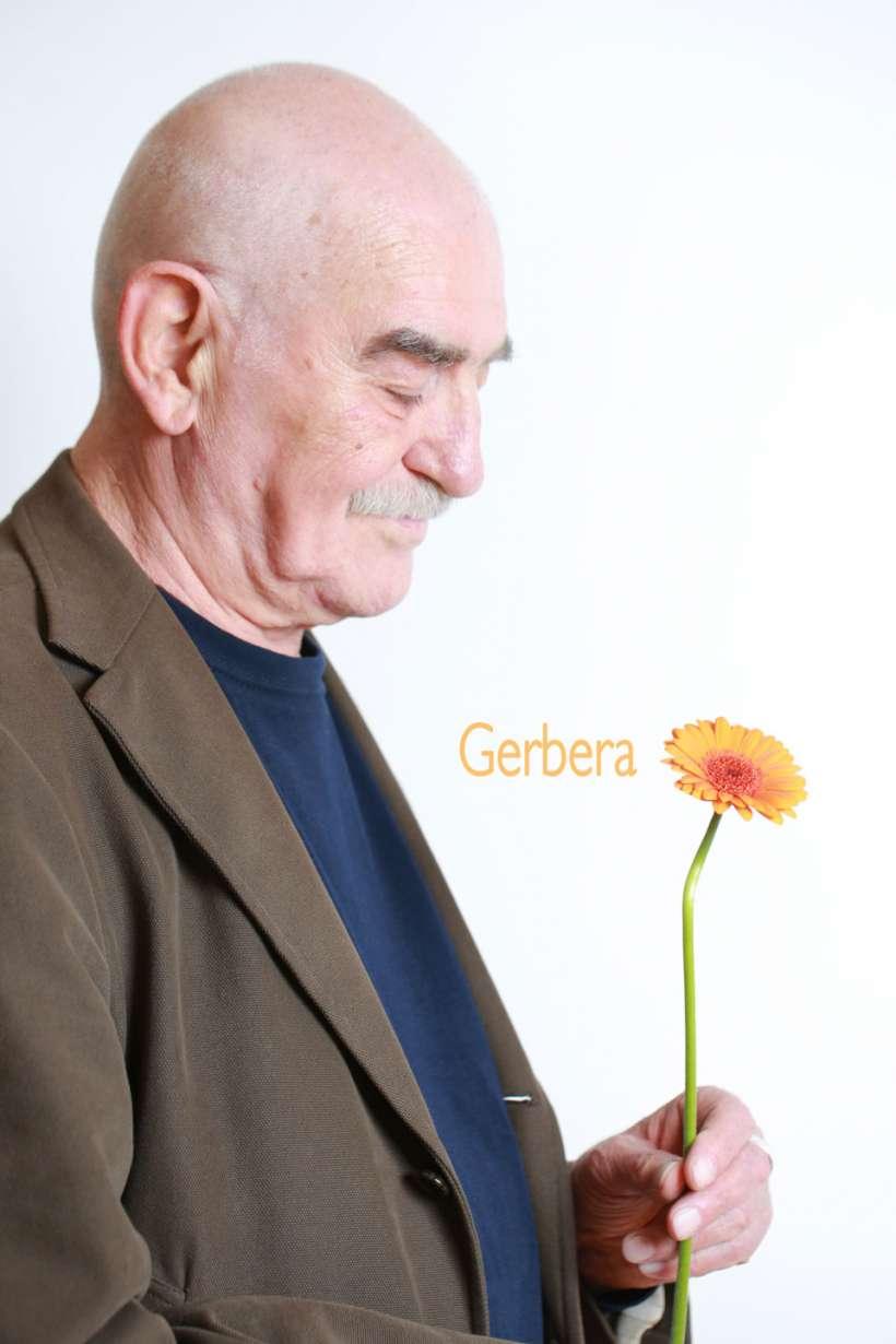 gerbera-2.jpg